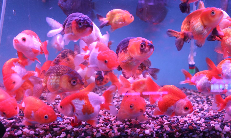 aquarium shop singapore