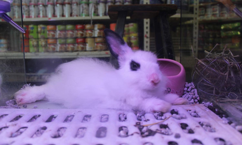 pet shop singapore