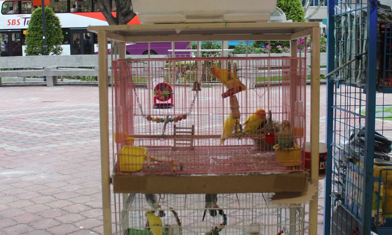 singapore pet shops