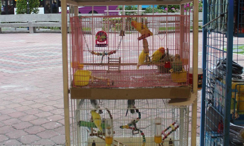 singapore pets shops